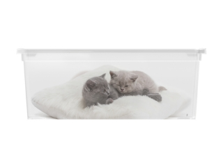 KIS C box Puppy and Kitten - S